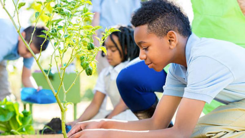Beneficios de un huerto escolar